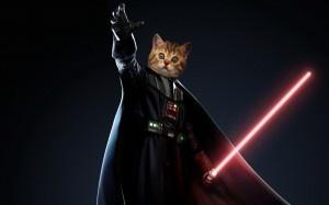 WEEKEND VIDEO: Jedi Kittens Kjjhhk10