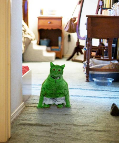 WEEKEND VIDEO: Jedi Kittens Tumblr14