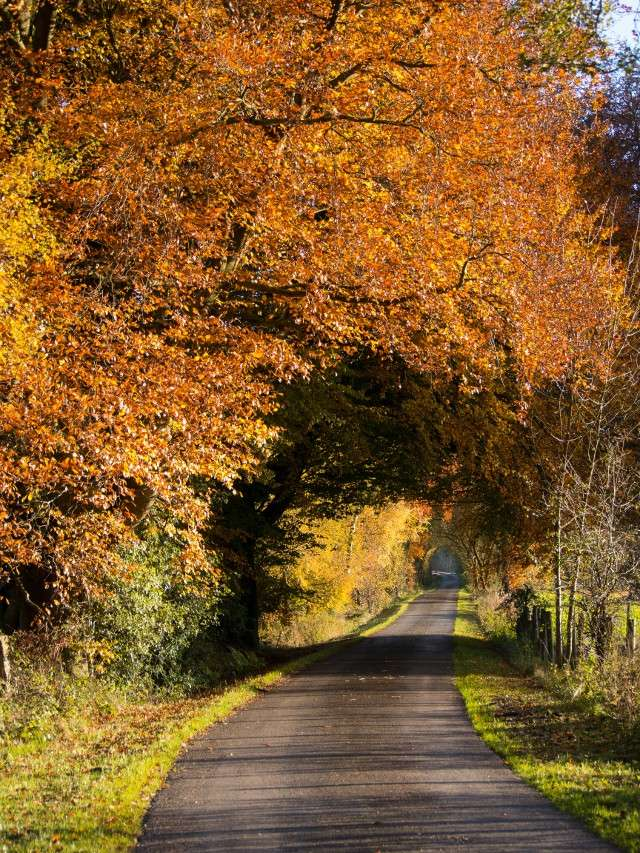 Autumn Colours Lane10