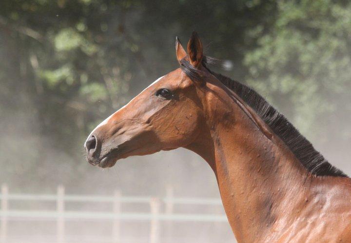 Lire le physique des chevaux - Linda Tellington Jones!  Img_4010
