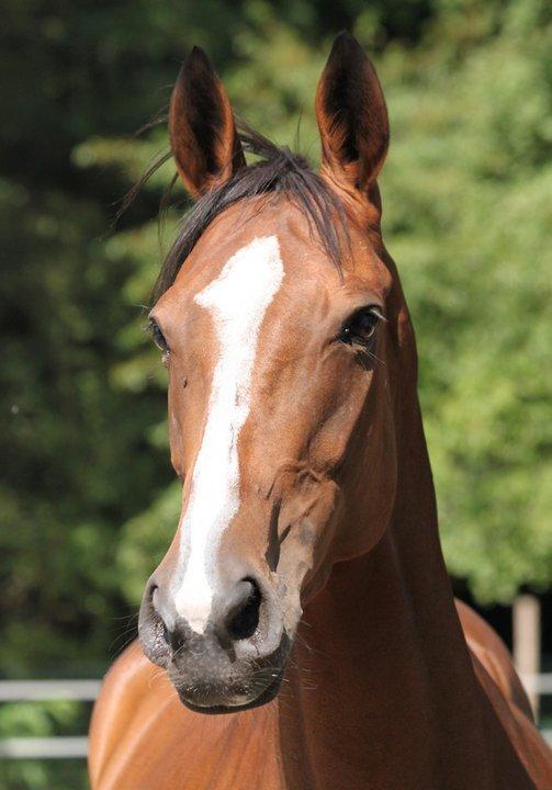 Lire le physique des chevaux - Linda Tellington Jones!  Img_4011