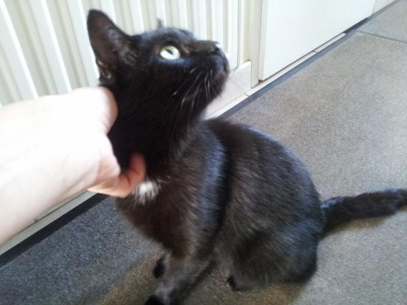 génial chatte noire orgie Australie