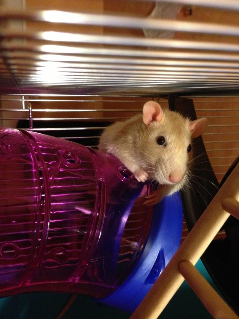 mes ratounes au complet!! Photo11