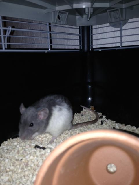 mes ratounes au complet!! Photo_22