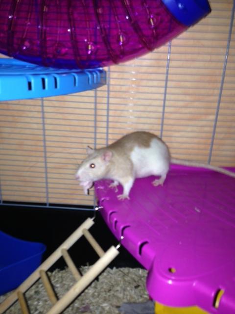 mes ratounes au complet!! Photo_26