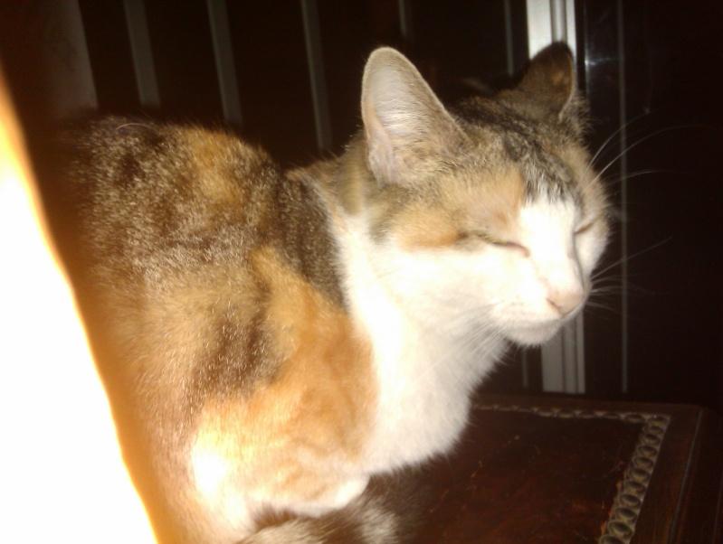 Les chats à adopter qui s'entendent avec les chiens Nanouc13