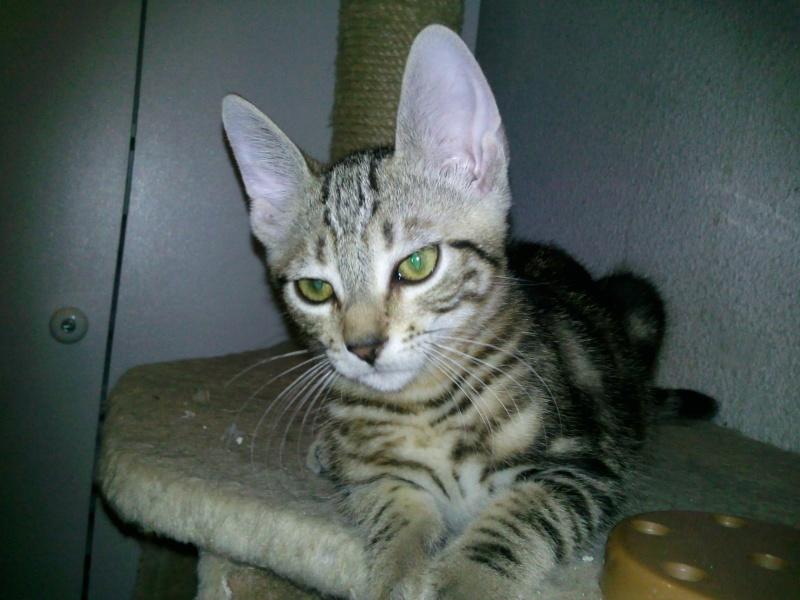 IWANDA  Tigre10