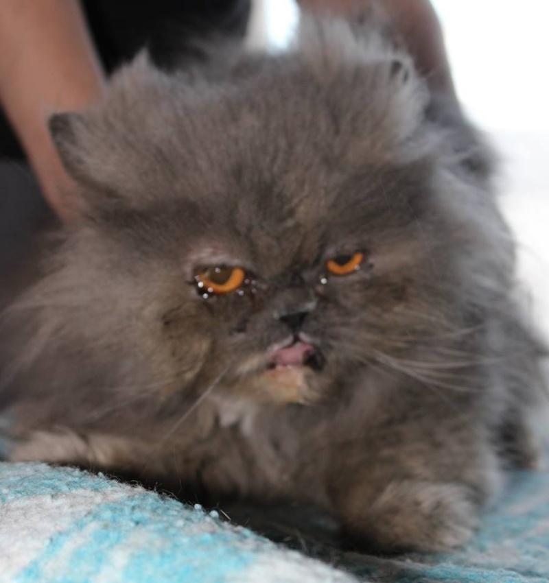 Persie - minette persanne sauvageonne cherche un parrain/une marraine 10591410