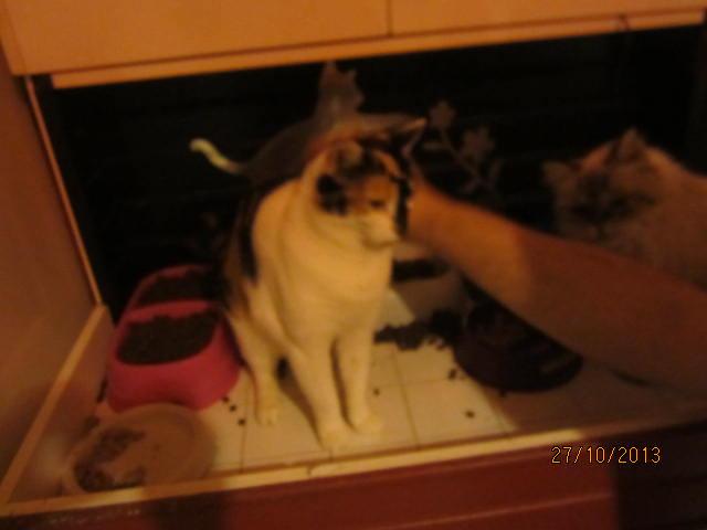 Lola - minette sauvage tricolore est marrainée par Emeline D. Merci ! Img_6526