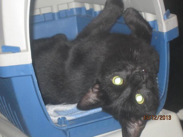 Noiraud - noir yeux verts né en 2013 Img_6918