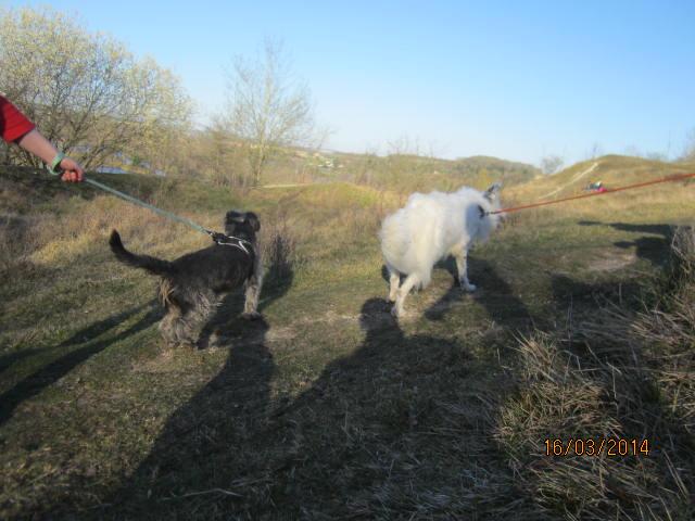 Taz, croisé border collie né le 01/05/2012 ( Adopté dans le (80) ) Img_7520