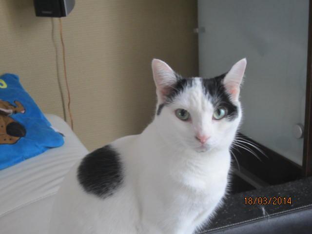 Violette - blanche et noire née en 2012 Img_7615