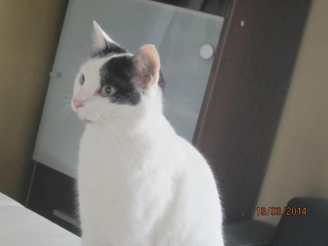 Violette - blanche et noire née en 2012 Img_7617