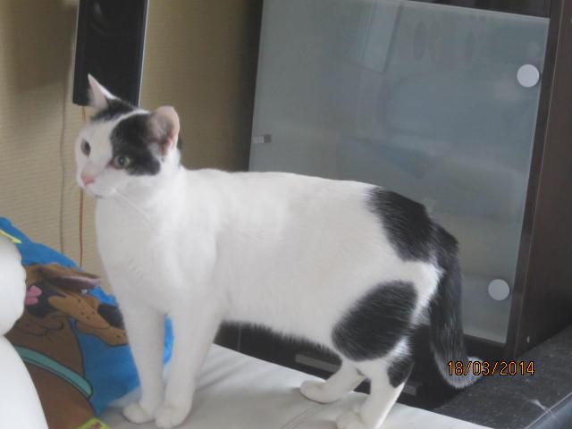 Violette - blanche et noire née en 2012 Img_7618