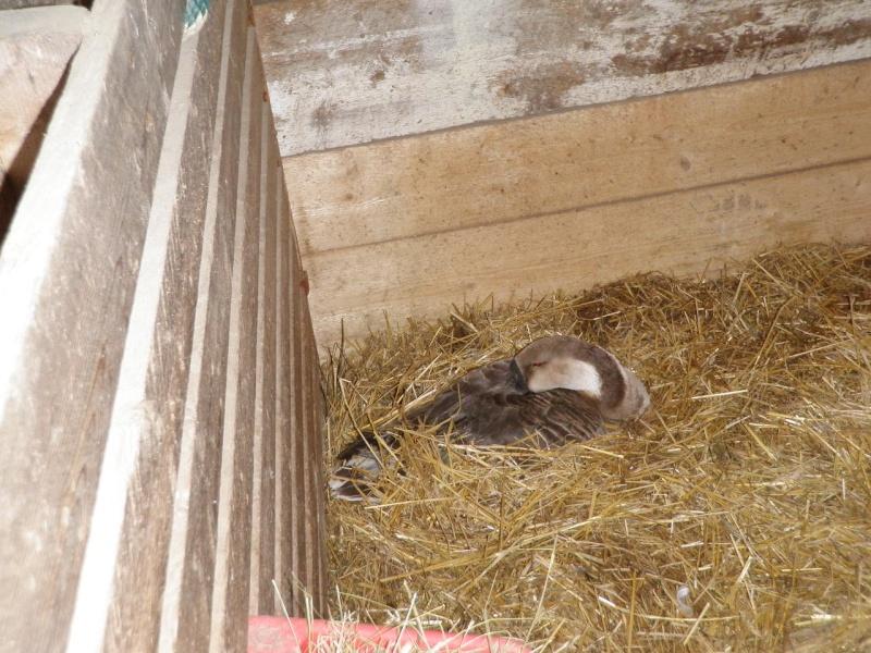 Nos bébés-animaux 2014 P4190011