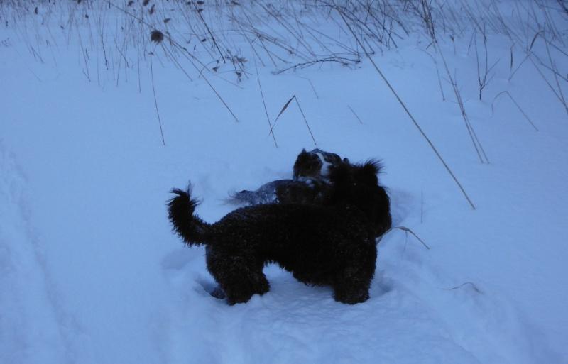 mes chiens et leur amie dans la neige Dscf1712