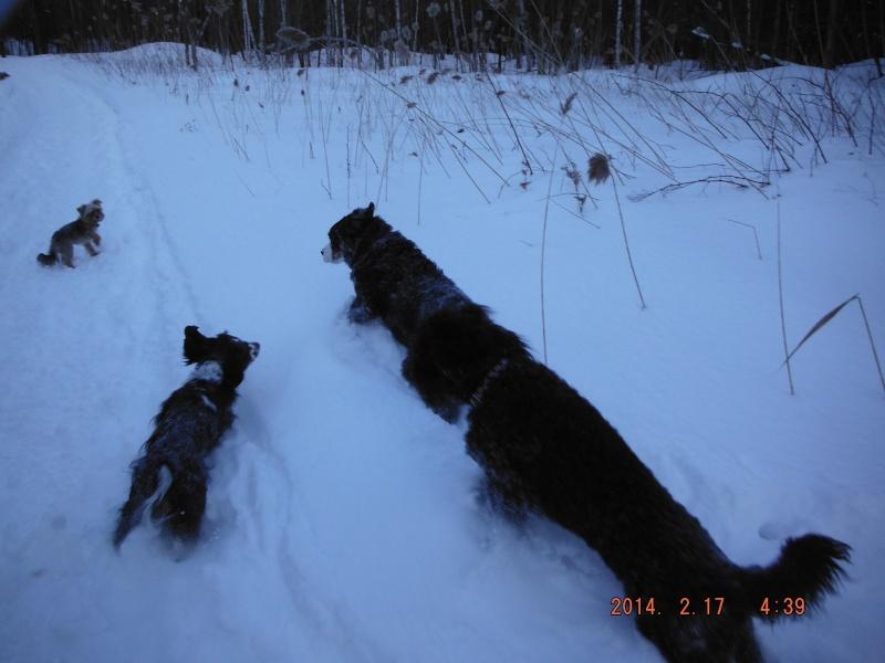 mes chiens et leur amie dans la neige Dscf1714