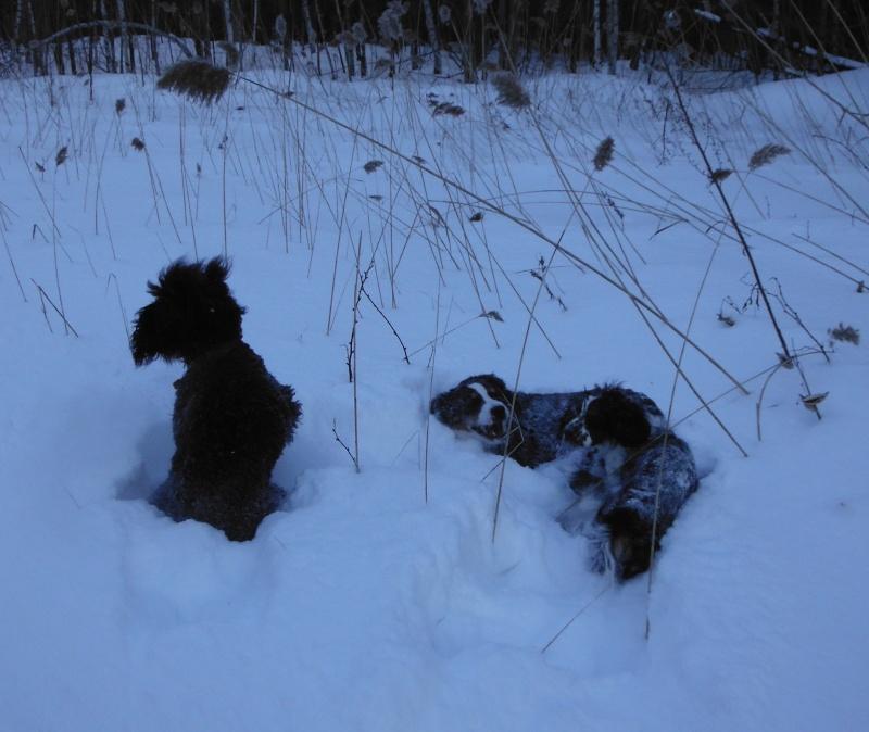 mes chiens et leur amie dans la neige Dscf1715
