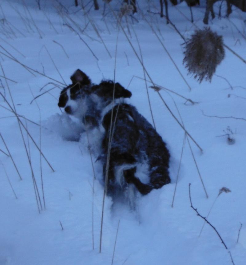 mes chiens et leur amie dans la neige Dscf1716