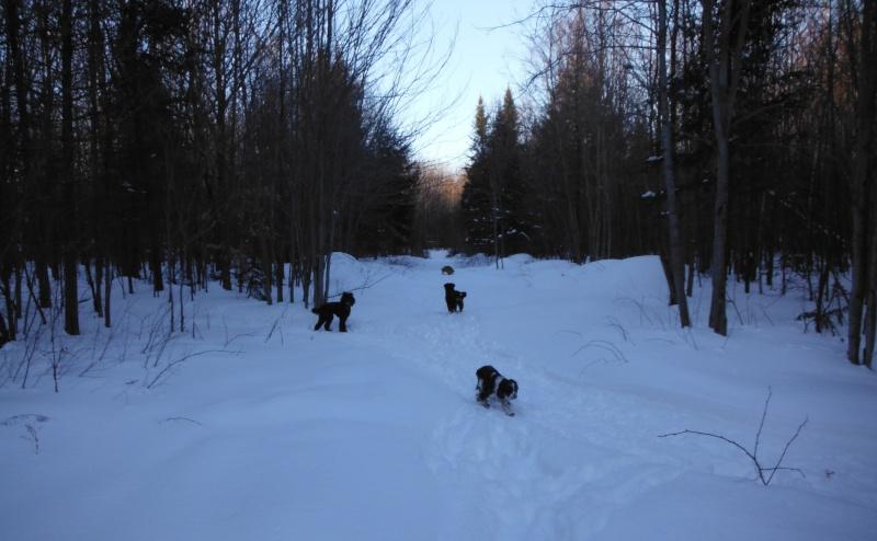 mes chiens et leur amie dans la neige Dscf1719