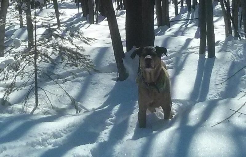 marche hiver Tyson10