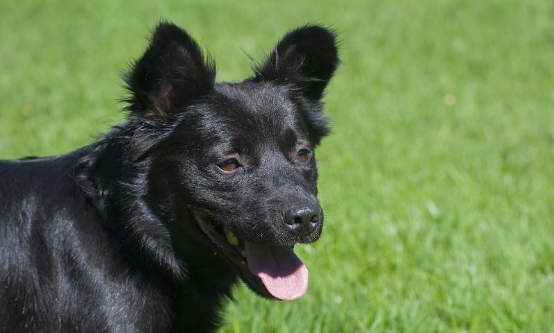 LUCKY ein Power Hund  Lucky010