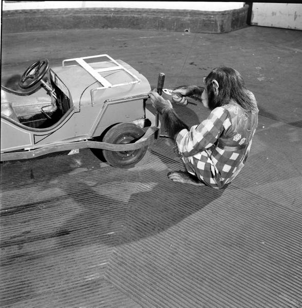 PEDAL CARS - Page 3 7b3a9710