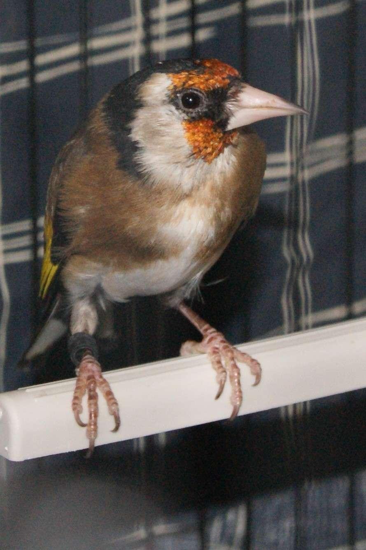 mâle ou femelle Dsc02911