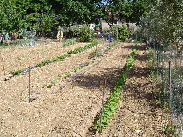 Mes oliviers et mon jardin Imgp1026