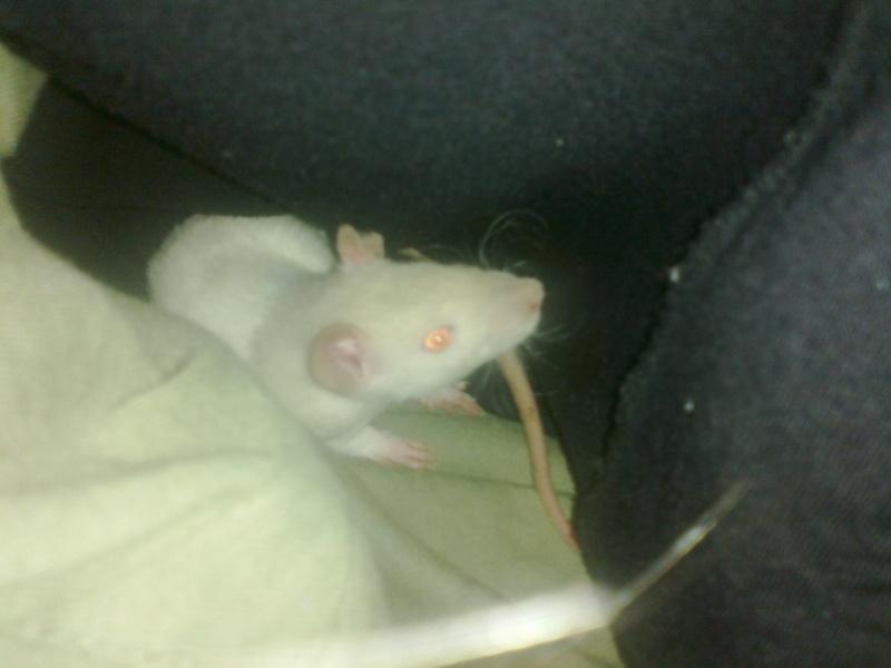 Mes rats d'hier et d'aujourd'hui...  09102010