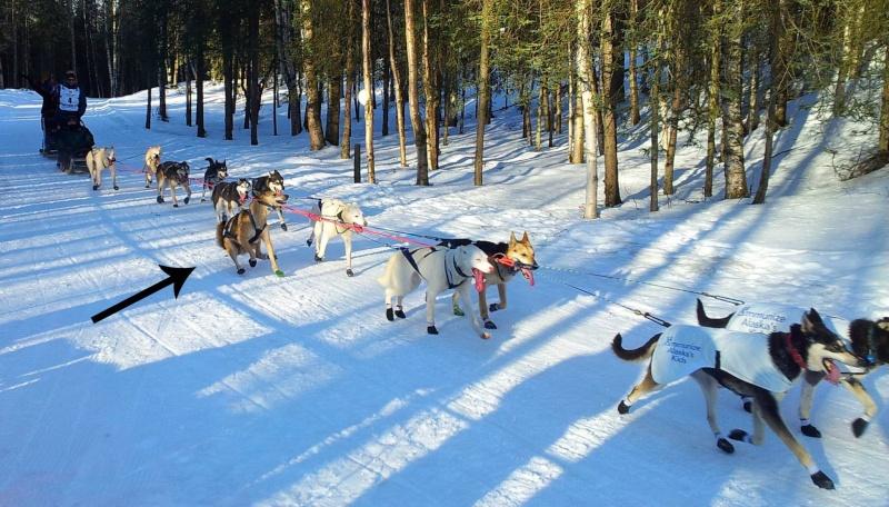 The Iditarod fun! 16224610