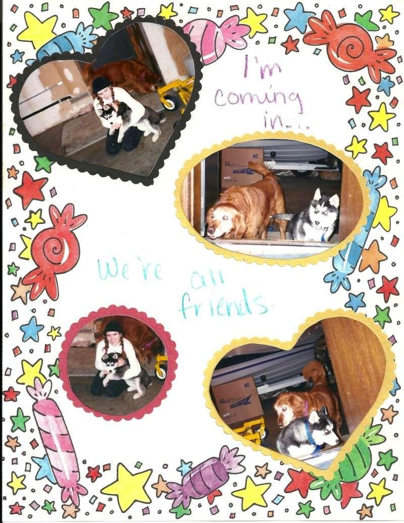 Tasha - I miss you! 10/28/97-10/30/13 - Page 2 Tasha510