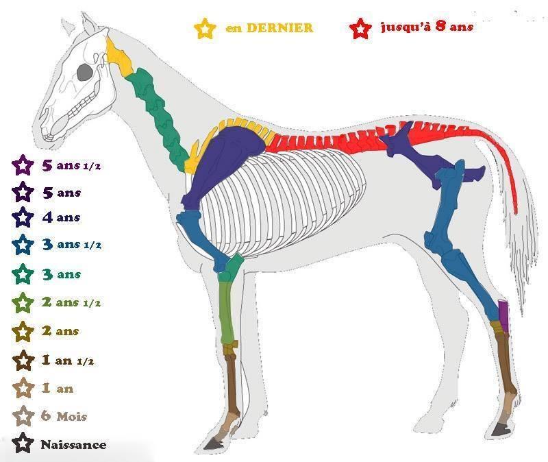 """à méditer """"la croissance d'un jeune cheval"""" 15025110"""
