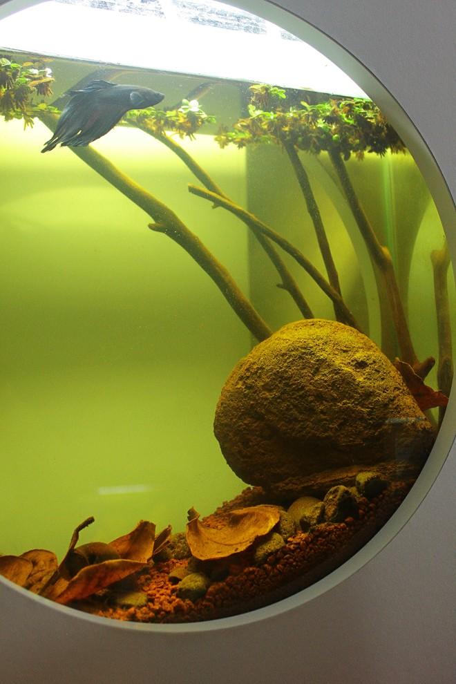 L'eau des biotopes amazoniens Img_3360