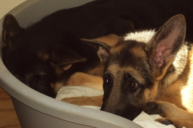 """Photos de vos chiens """"malheureux"""" Dsc02710"""