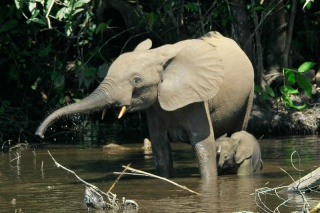 L'ÉLÉPHANT Elepha12