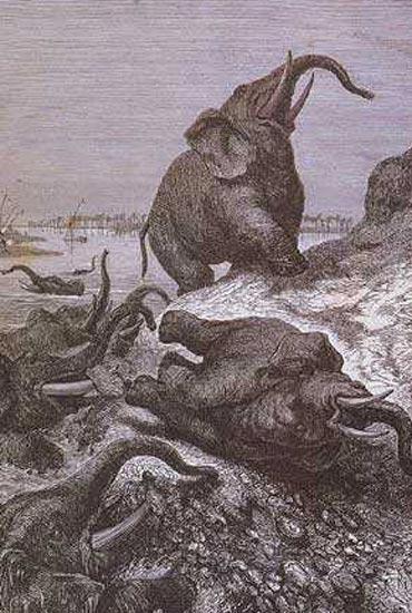 L'ÉLÉPHANT Elepha16