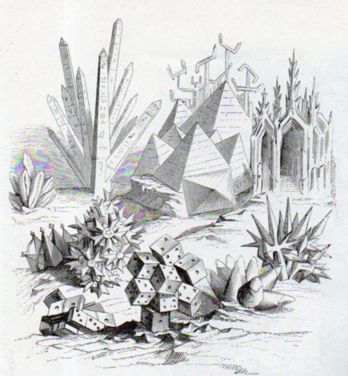 GRANDVILLE (1803-1847) Plante10