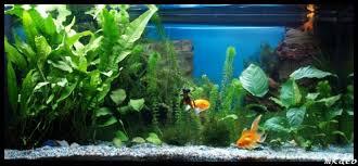 Lucas le poisson rouge en attente... Talach10
