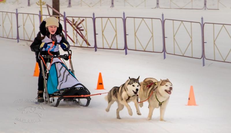 Первые Томские городские открытые соревнования по снежным видам Ездового Спорта Снежные Псы - 2014 - Страница 2 Img_9810