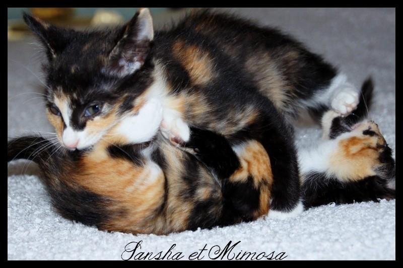 MINDIE (Mimosa) Dsc05918