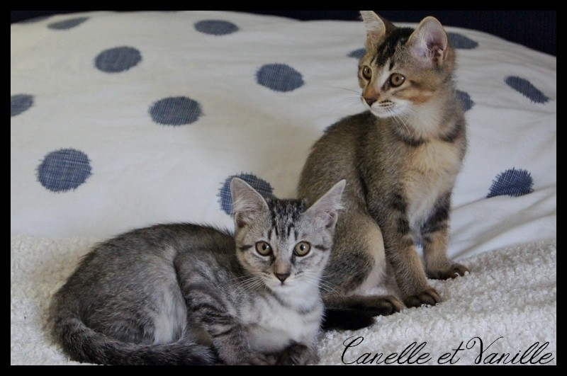 CANELLE & VANILLE  Dsc06316