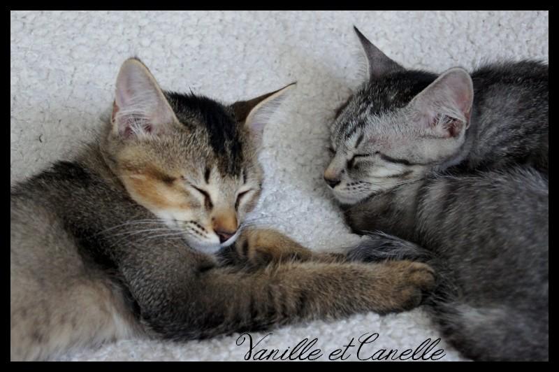 CANELLE & VANILLE  Dsc06333