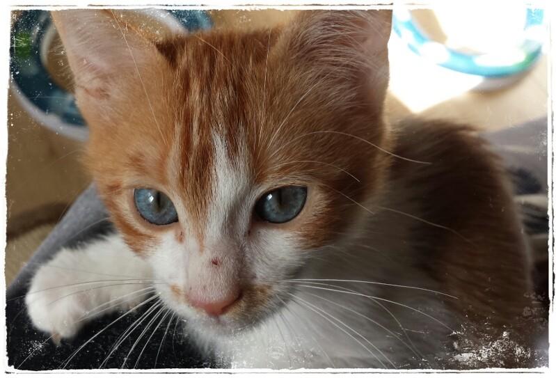 GIZMO (Félix) Picsar86