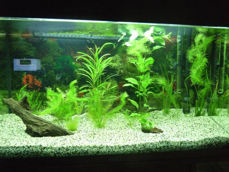 Décoration de mon Juwel rio 125L brut planté P1030510
