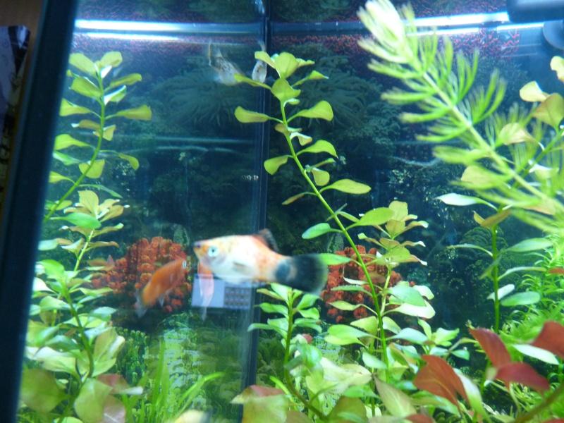 """Juwel Rio 125L """"Jungle Park"""" P1030619"""