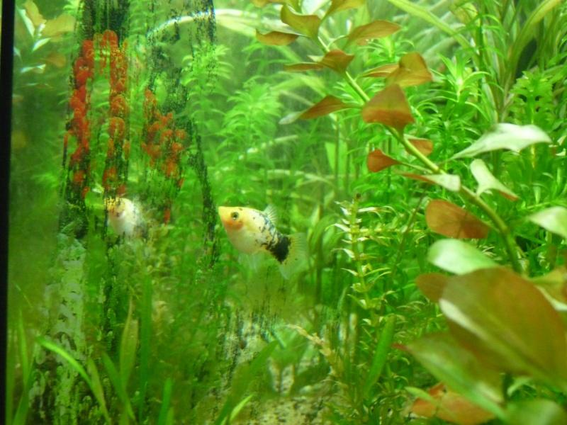 """Juwel Rio 125L """"Jungle Park"""" P1030620"""