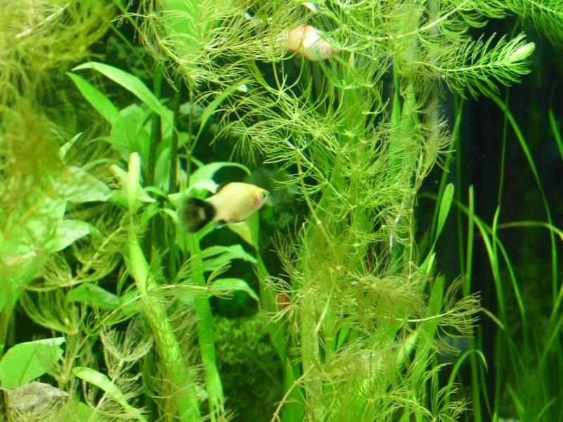 """Juwel Rio 125L """"Jungle Park"""" P1030622"""