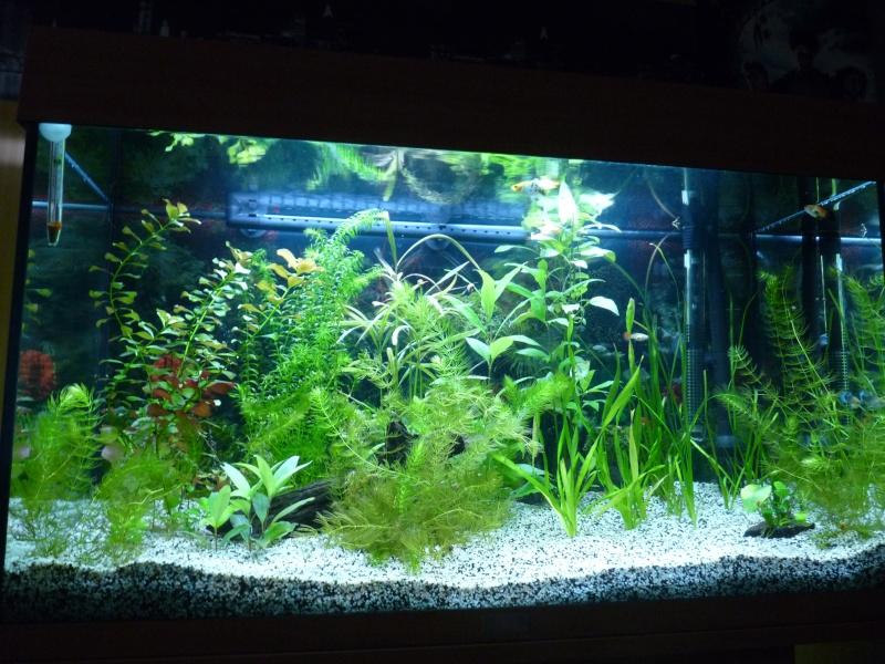 Décoration de mon Juwel rio 125L brut planté P1030628