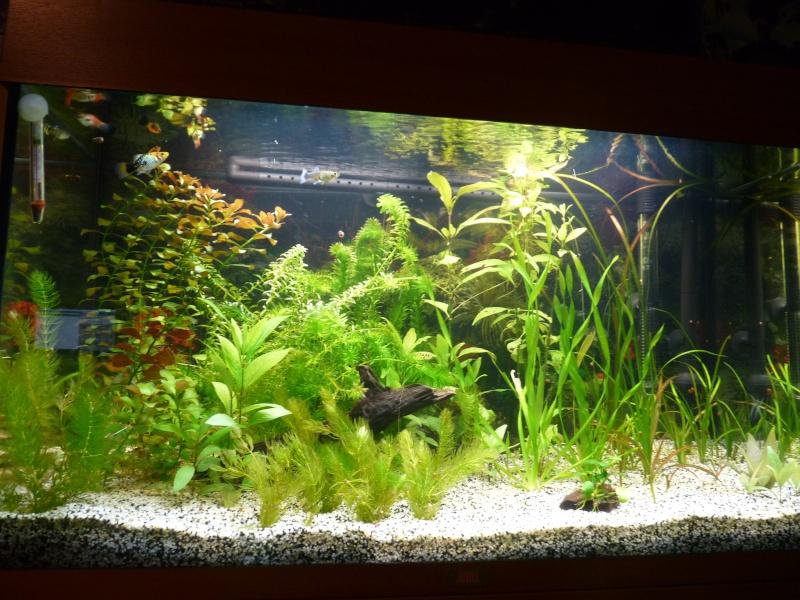 """Juwel Rio 125L """"Jungle Park"""" P1030635"""